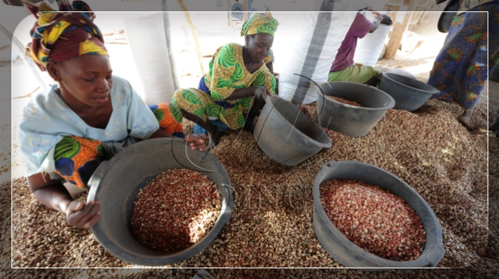 groundnut production in Africa