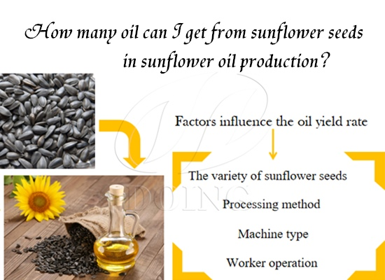 How many oil can I get from sunflower seeds in sunflower oil production?